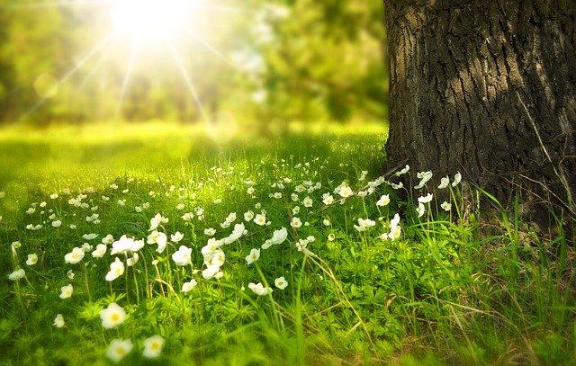 kiedy sadzić trawy ozdobne